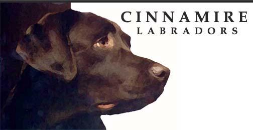Cinnamire Labrador Retrievers - English Labrador Breeder